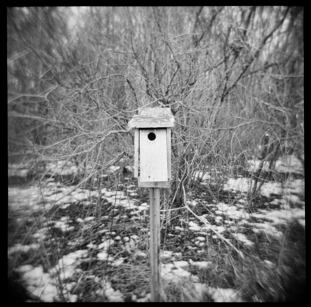 Birdhouse , HP5 Plus, Holga     Nicholas Schietromo
