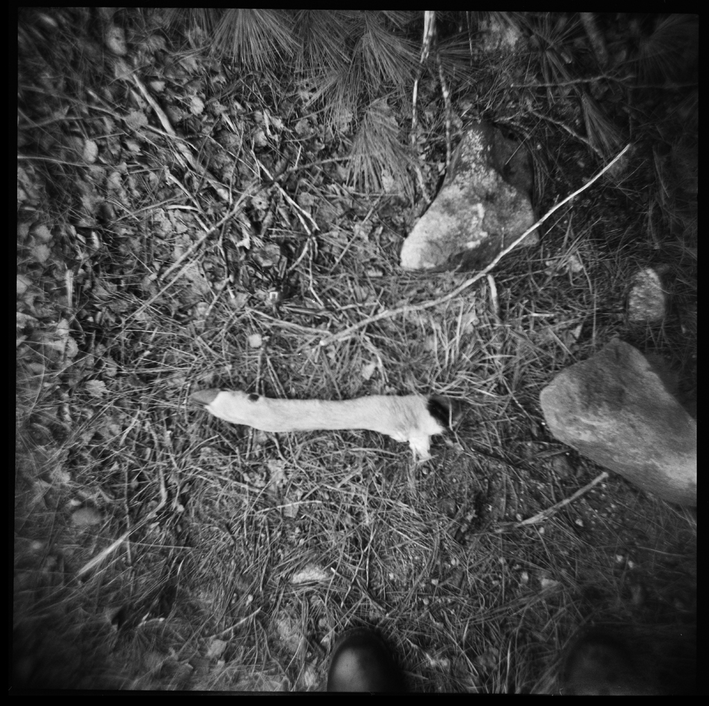 Deer remains , HP5 Plus, Holga     Nicholas Schietromo