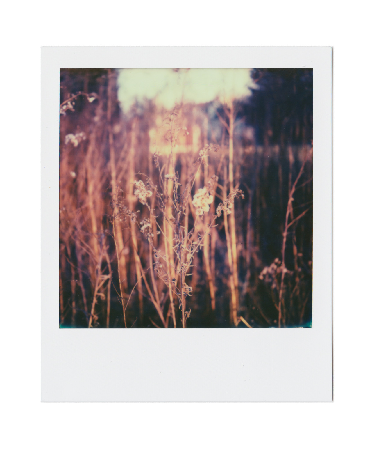 I Don't Know What These Are,   PX-70.
