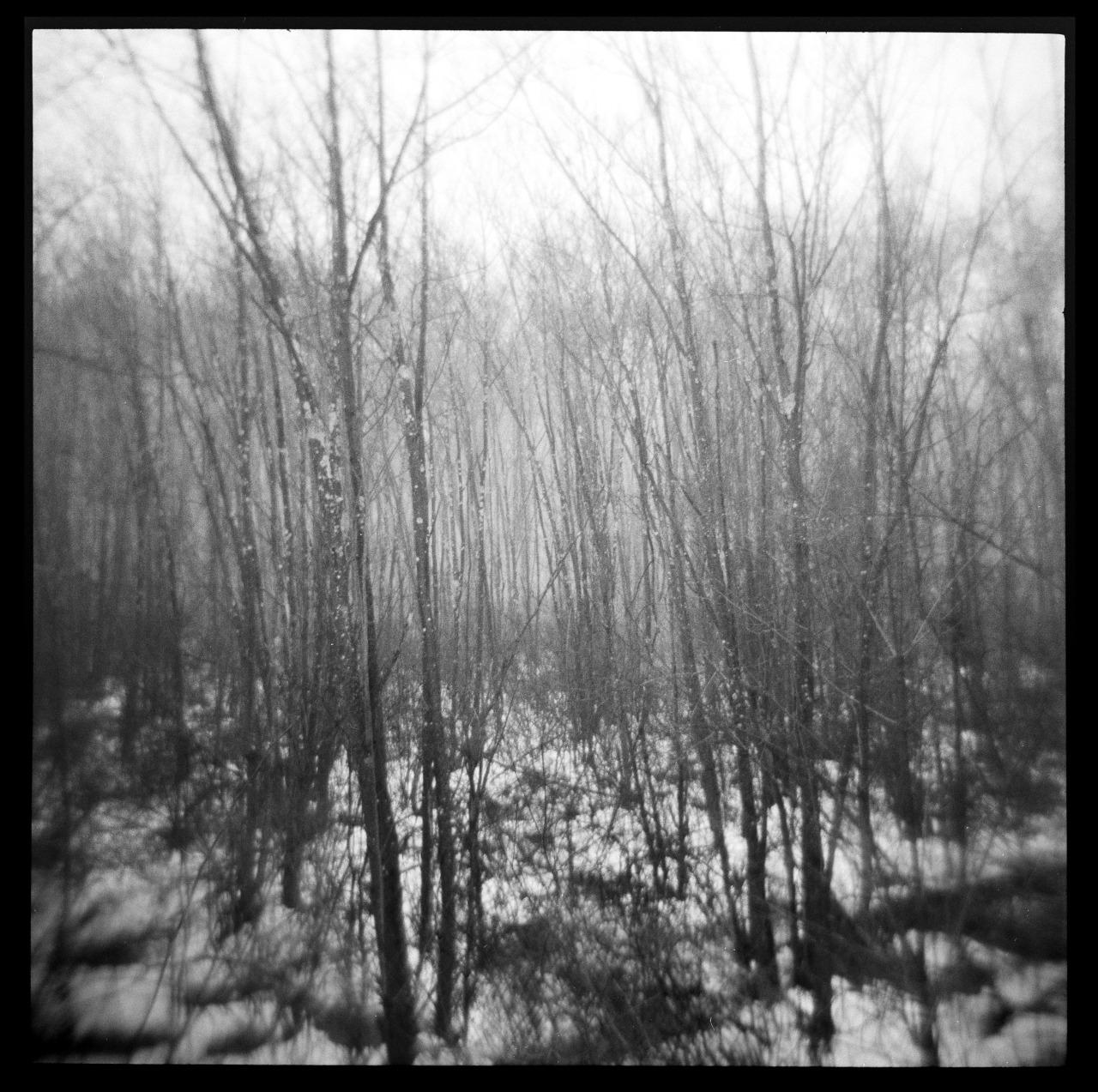 Woods, Holga, HP5    Nick Schietromo