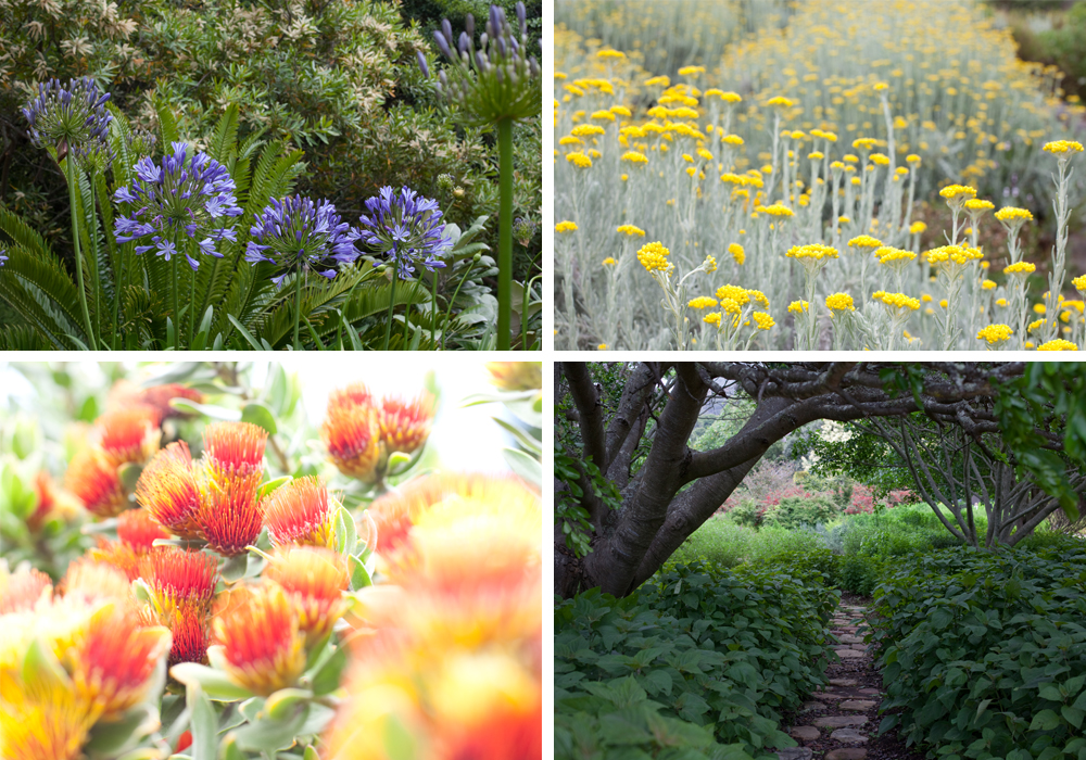 Kirstenbosch National Botanical Gardens, photos by Christina Wedge