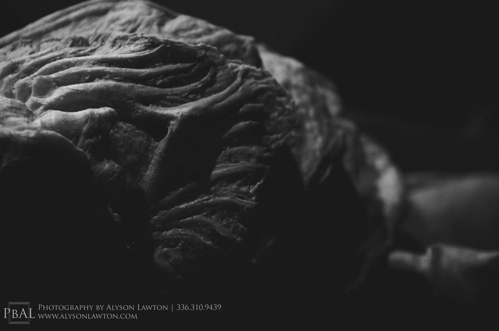 Anatomy of a predator. Winston Salem Wedding, Portrait and Event Photographer | Photography by Alyson Lawton