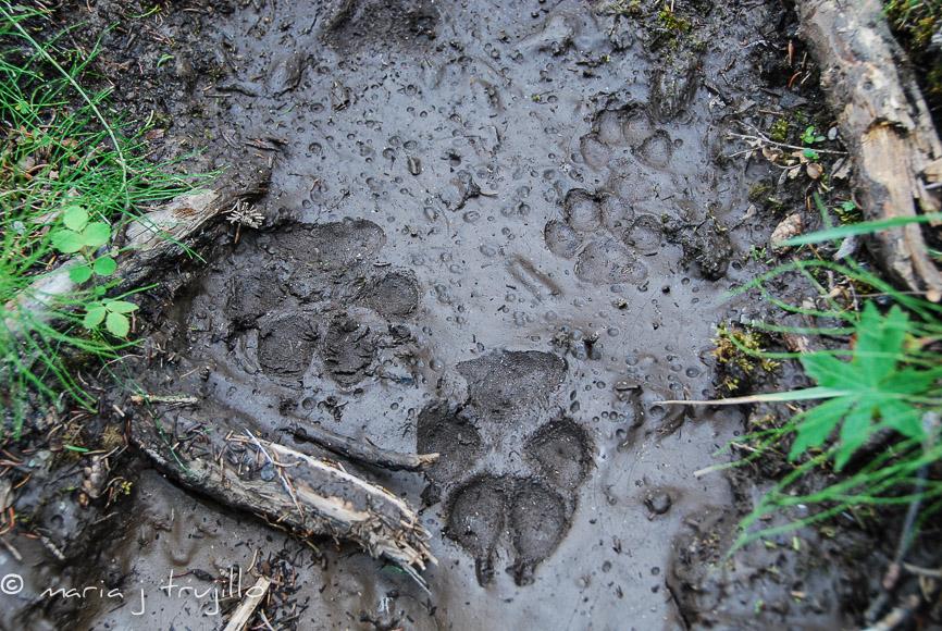 webcopy-left-wildlife (3 of 14).jpg