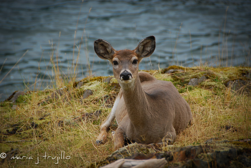 webcopy-left-wildlife (5 of 14).jpg