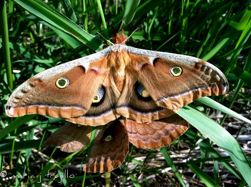 webcopy-left-wildlife (6 of 14).jpg