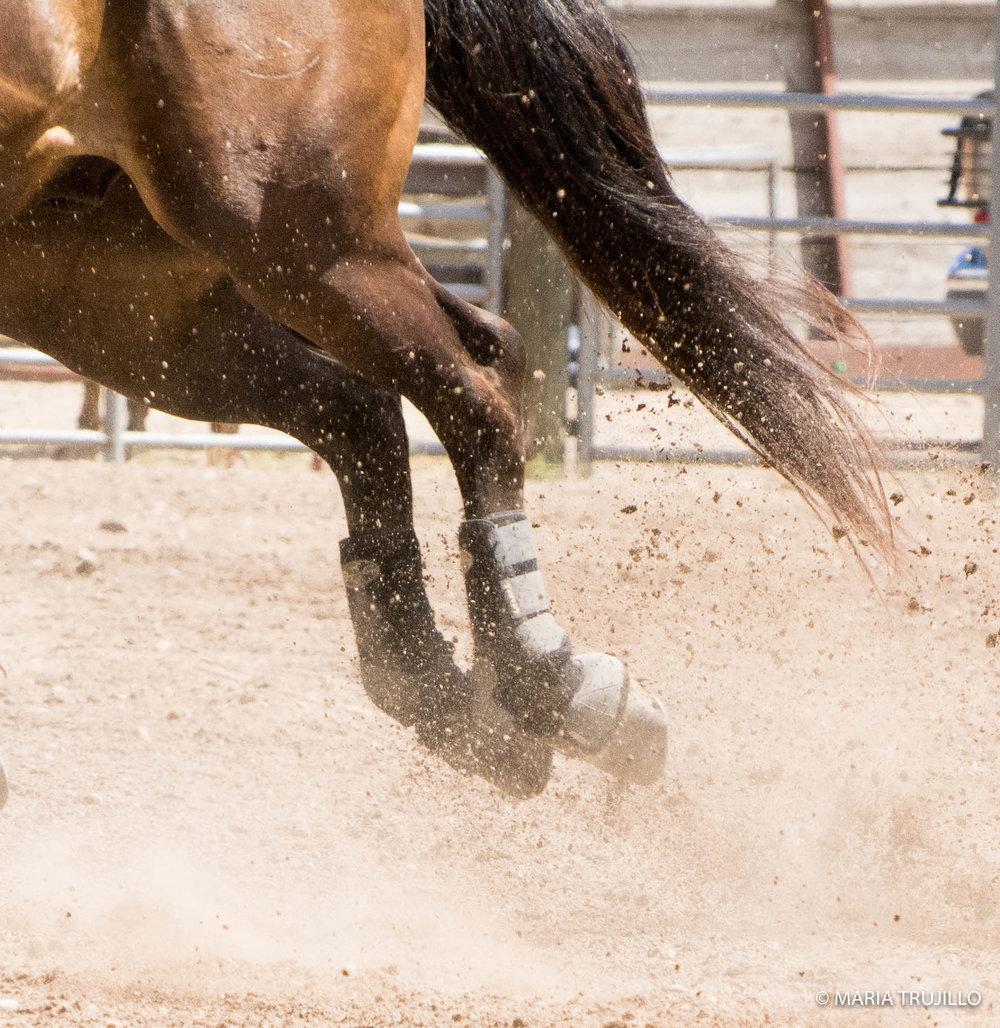augusta rodeo 2016-40.jpg