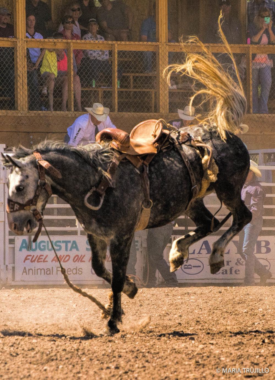 augusta rodeo 2016-57.jpg