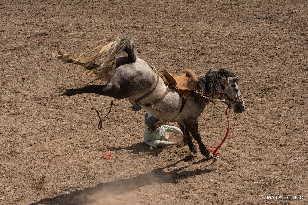 augusta rodeo 2016-50.jpg