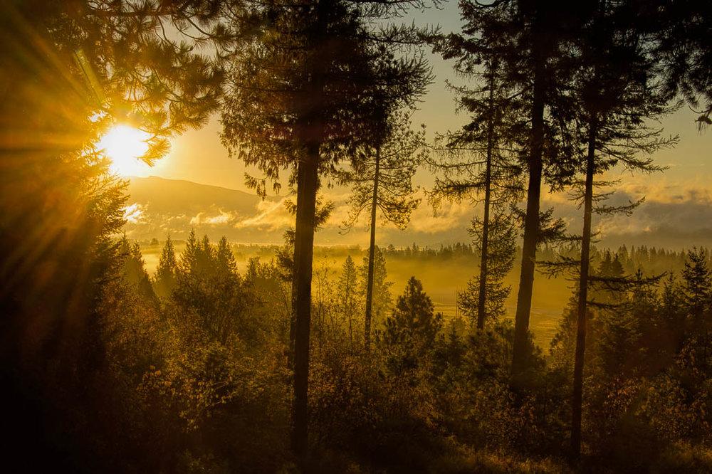sunrise ss-1.jpg