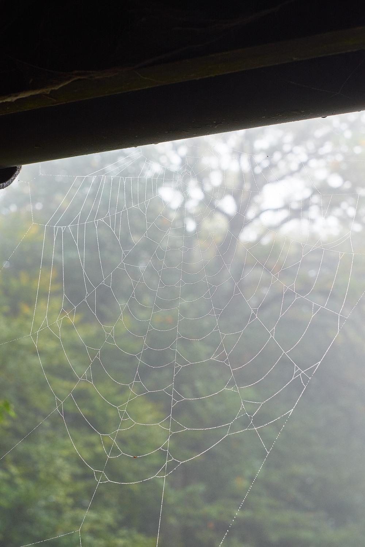 En klassiker, spindelnätet. Egentligen ville jag lägga upp en cool punkarlarv här som jag träffade i trädgården, men den puckade datorn verkar ta evigheter att ladda upp bilden, så den får ni klara er utan. Suck.
