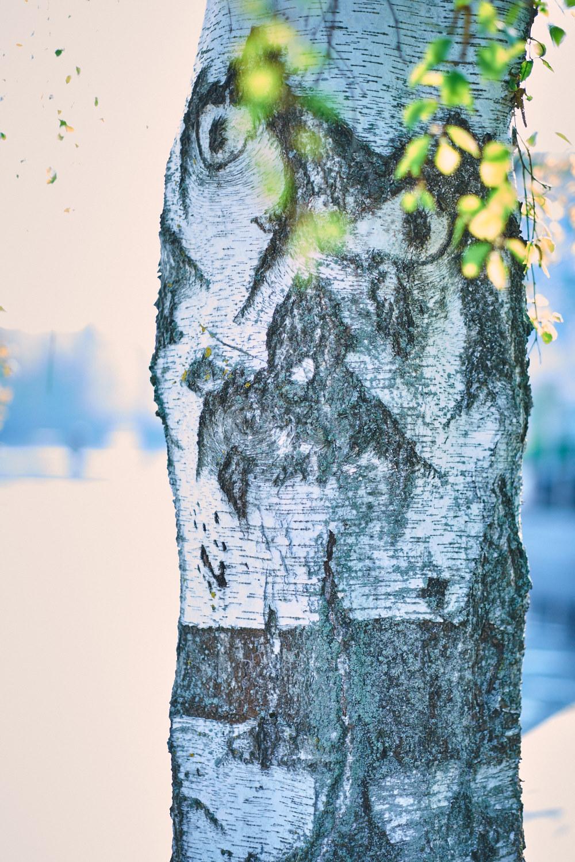 gubbeniträdet