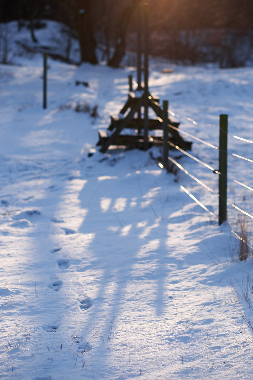 långa vinterskuggor
