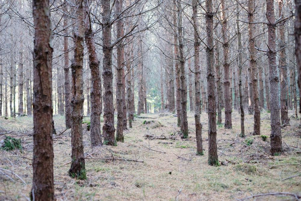 Välkommen in hälsar träden