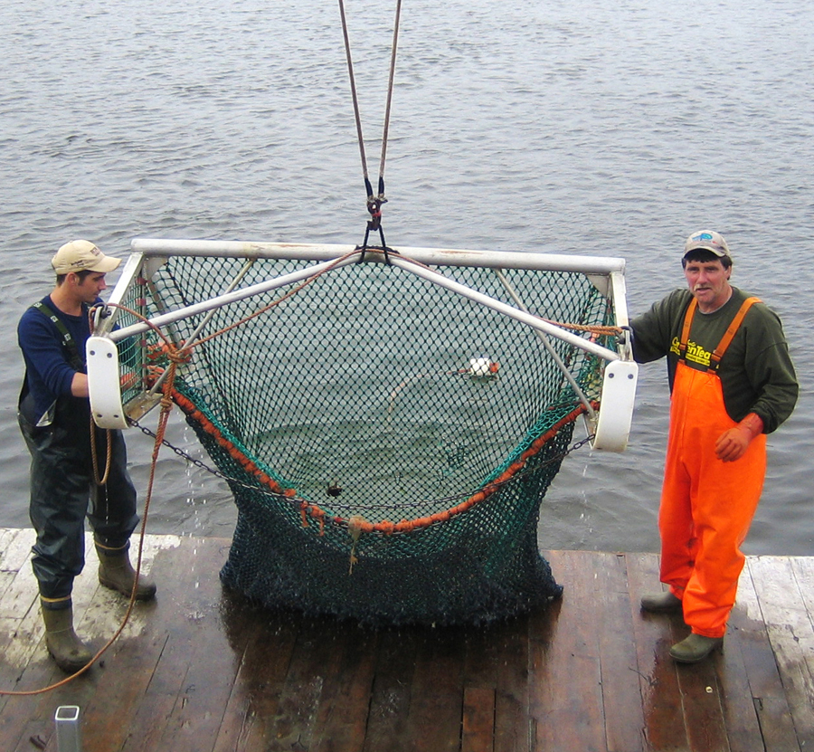 Net Being Hoisted_lr.jpg