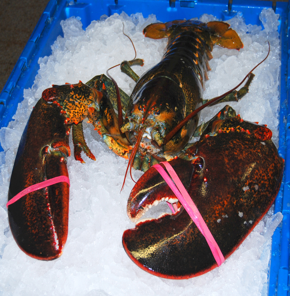 Product-LOBSTER.jpg
