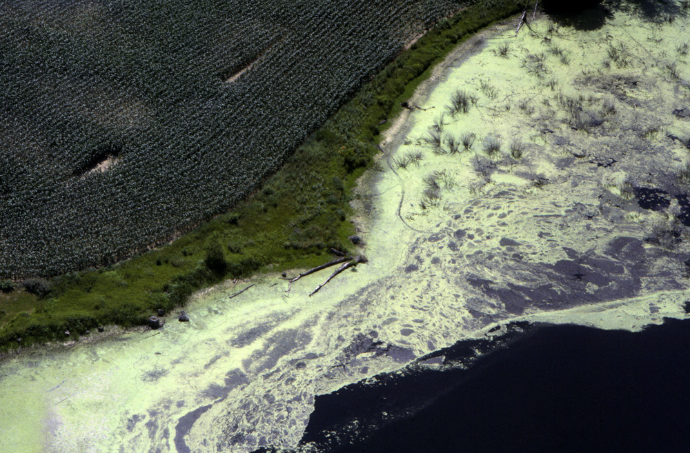 04-algae-72.jpg
