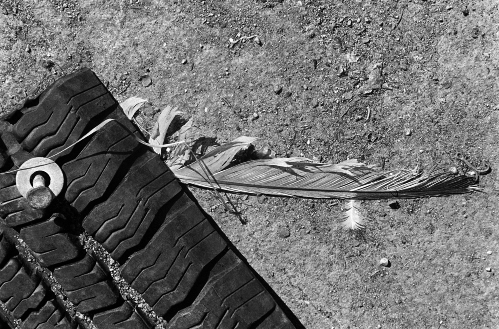 01-remnant-feather & tire 72.jpg