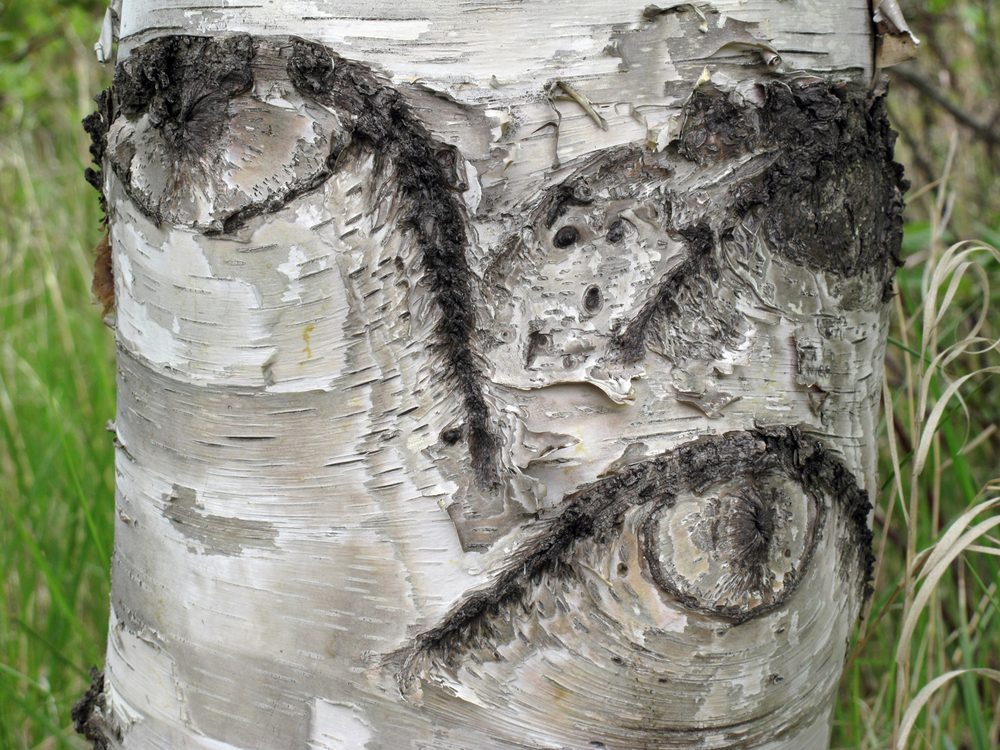 Cubist Tree