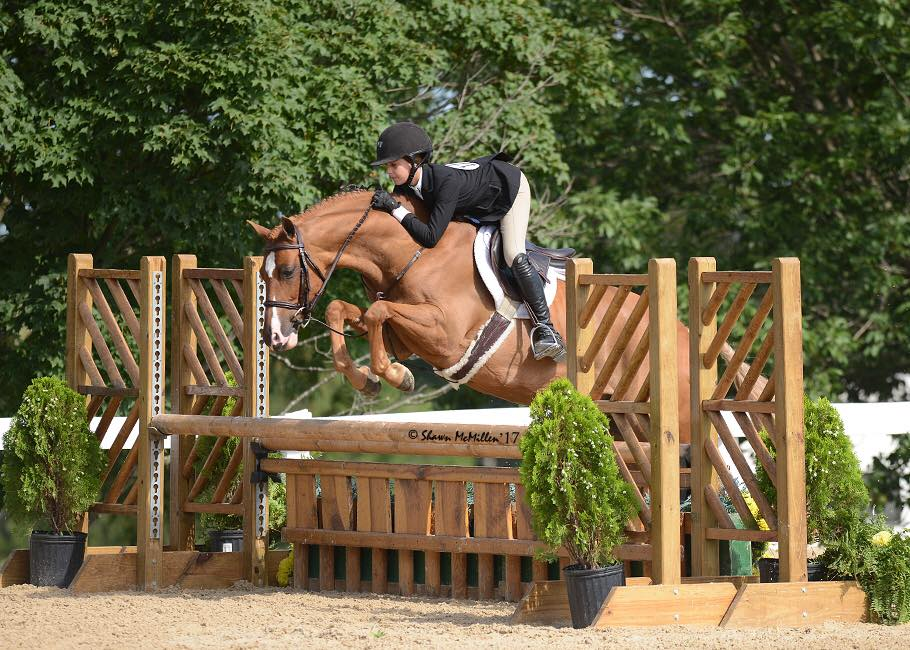 "Gabrielle Sokolow & EverAfter ~ ""Flynn"" is a Large Green Pony FOR SALE!"
