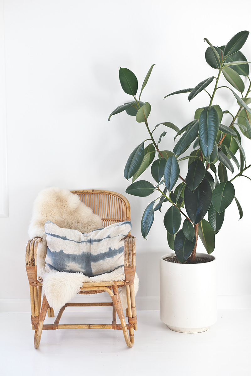entryway sheepskin rubber tree
