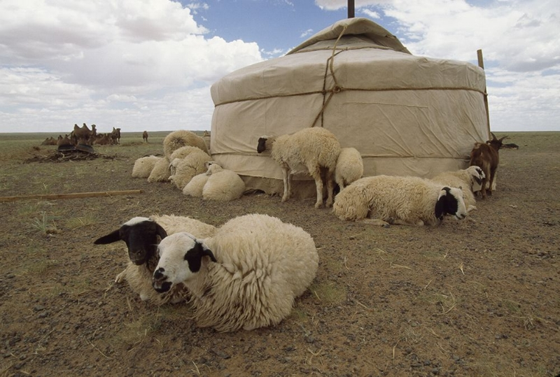 NationalGeographic.com: Mongolian Yurt