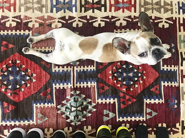 This beautiful vintage rug is a gift from one of our awesome clients and I love it! Colorful textiles make me (and Lois) very happy 🐶