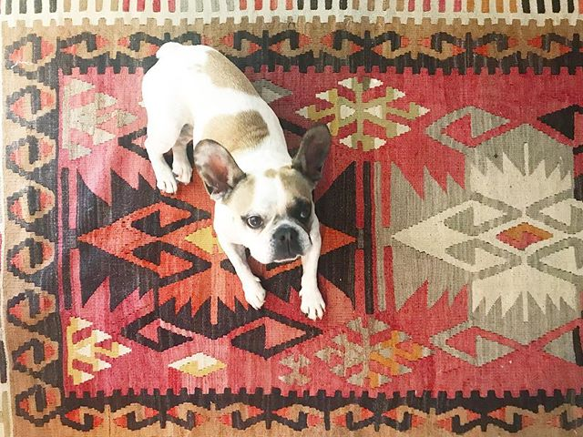 Maybe I'll start a #loisonrugs series 😉💛
