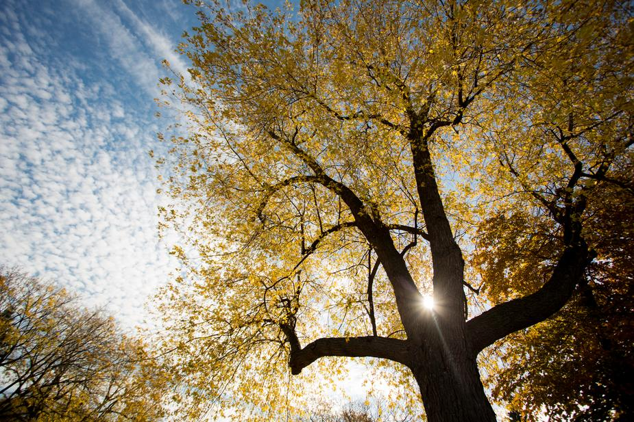 gold-light-through-tree_925x.jpg