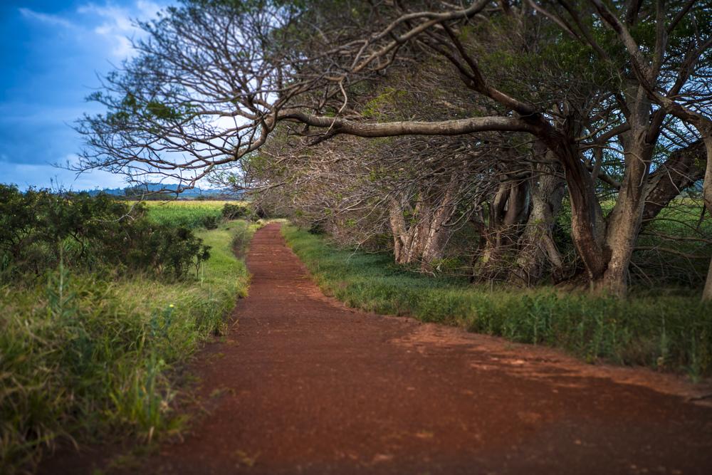 Maui-2757.jpg