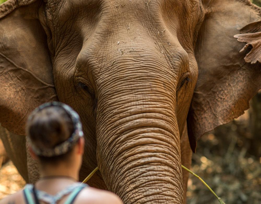 ElephantNaturePark-7824.jpg