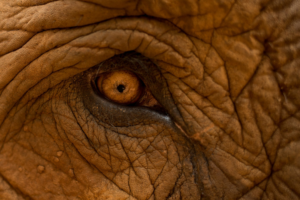 ElephantNaturePark-7888.jpg