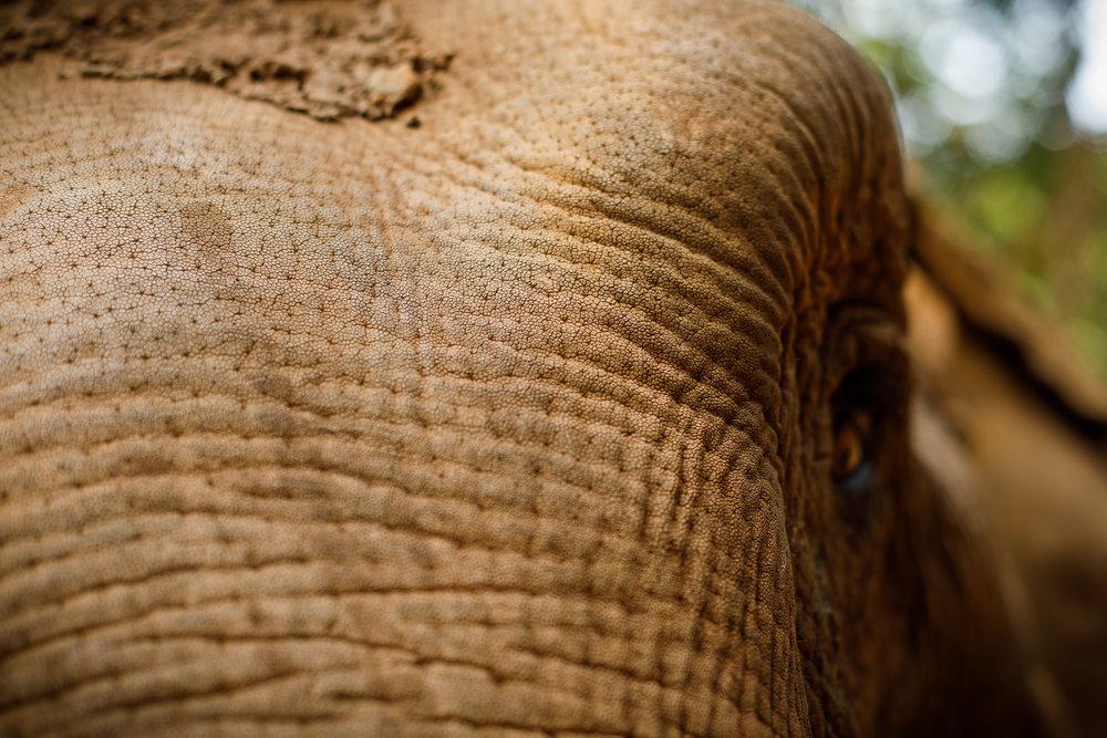 ElephantNaturePark-7601.jpg
