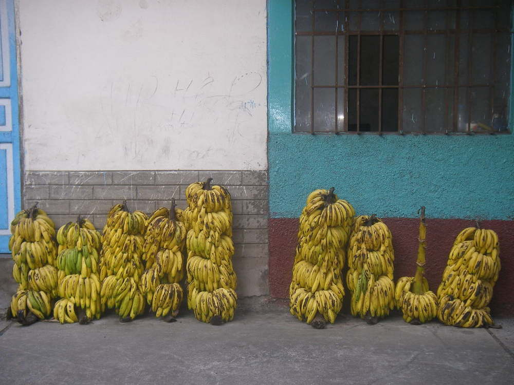 Giant banana bundles somewhere in Ecuador