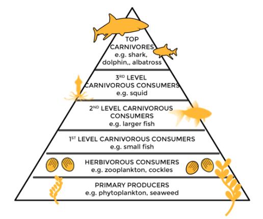 Amaranth oil saving sharks