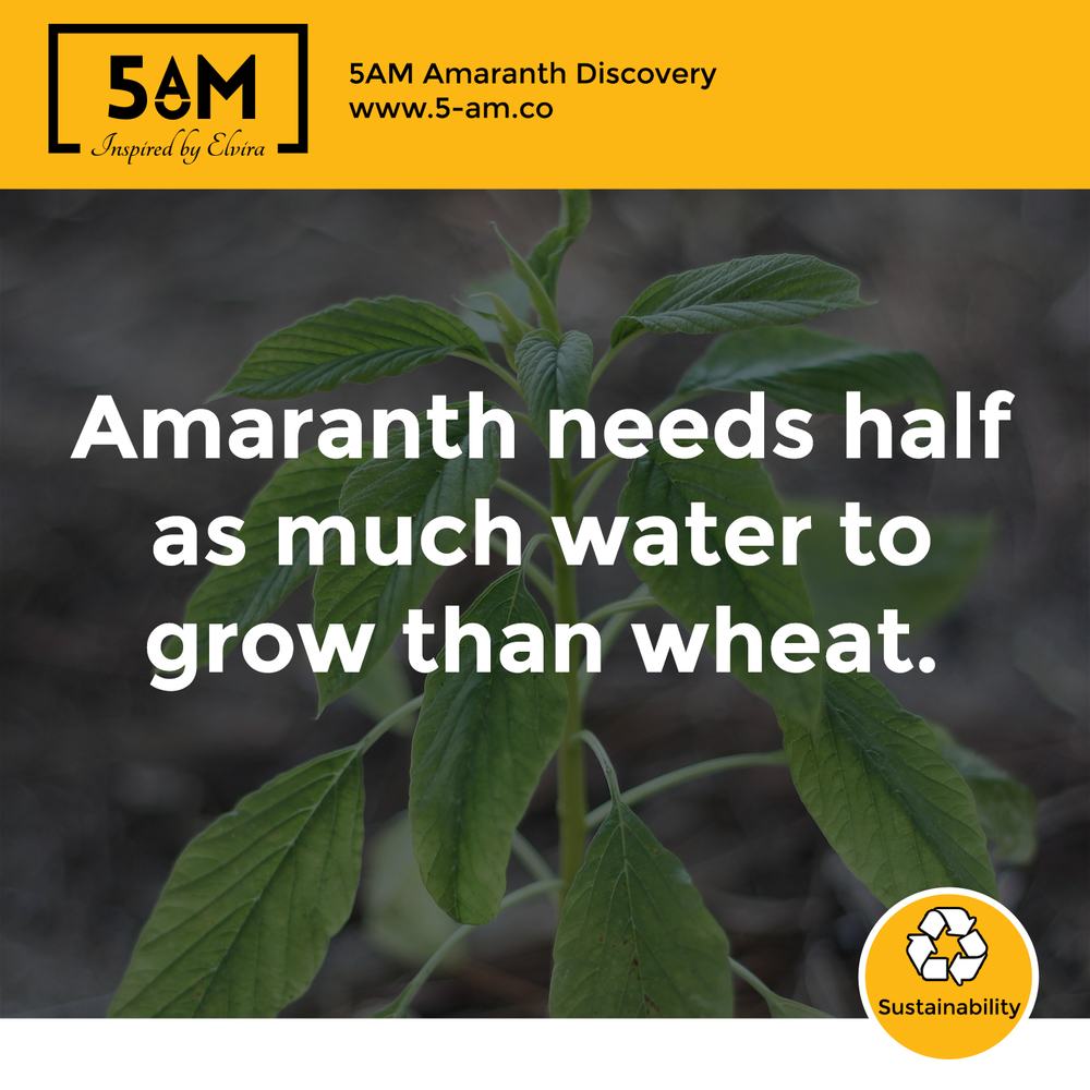 Growing amaranth saves water