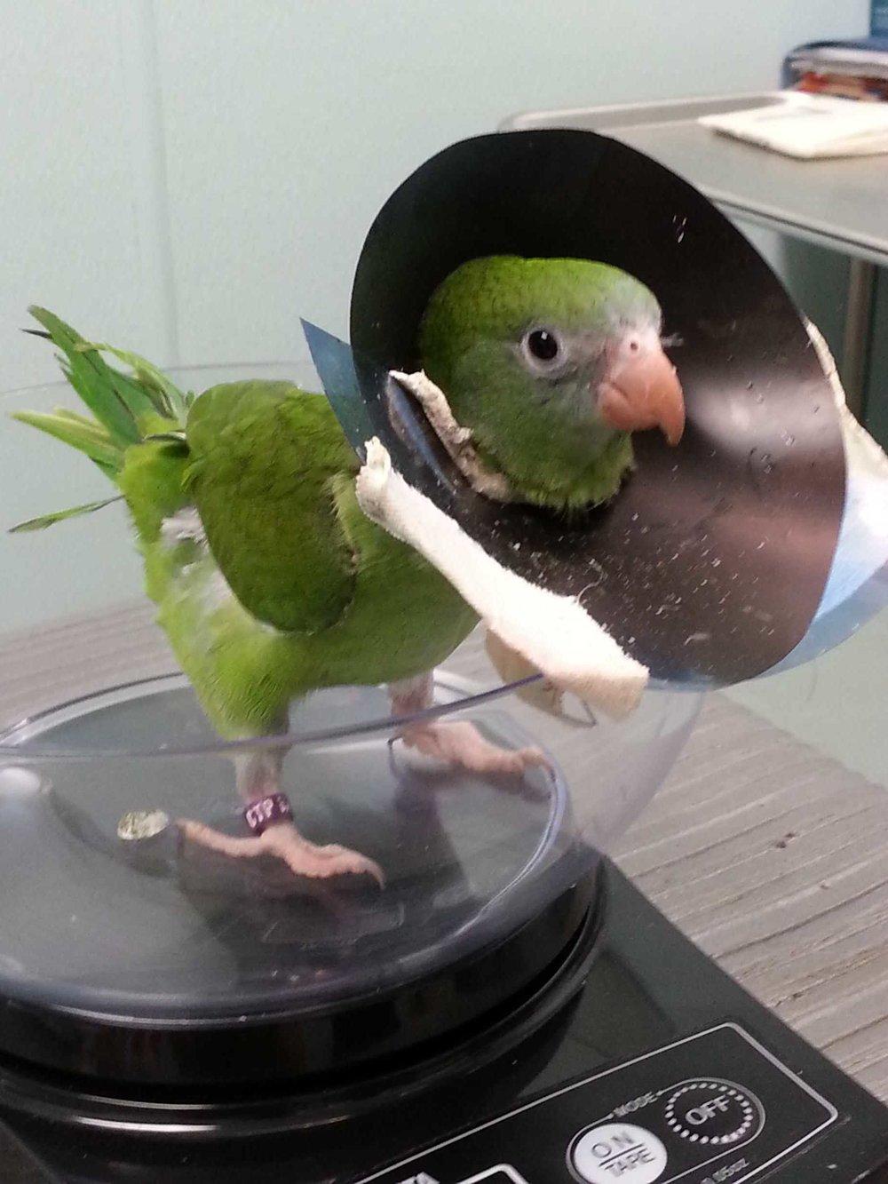 BirdEcollar.JPG