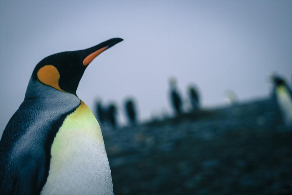 antarctica2013 (121 of 236).jpg