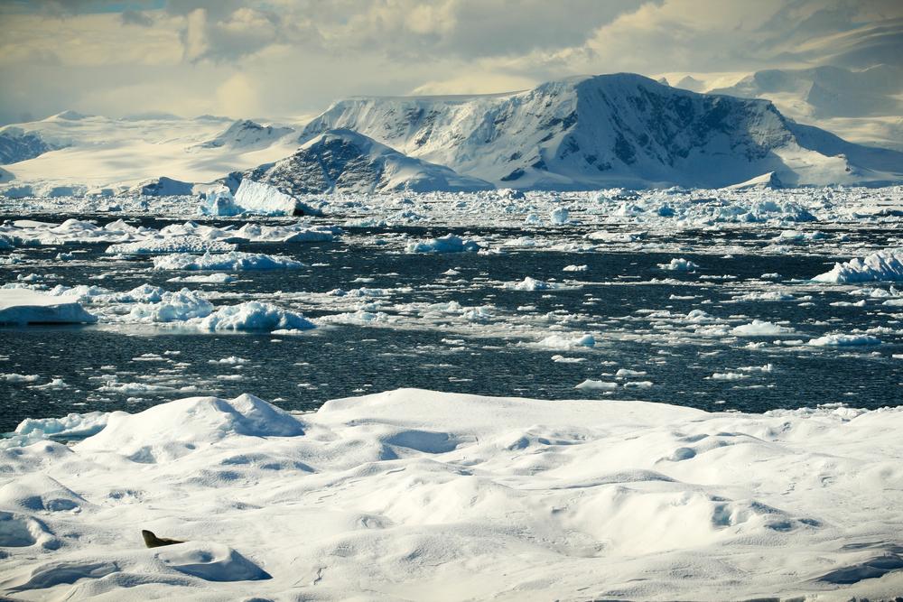 antarctica2013 (50 of 236).jpg