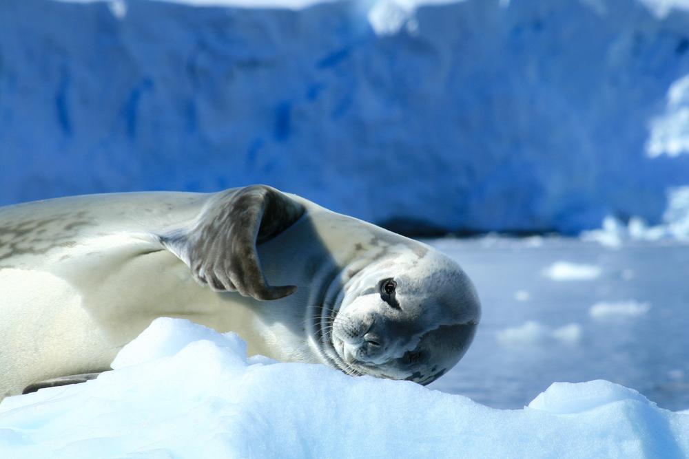 antarctica2013 (149 of 236).jpg