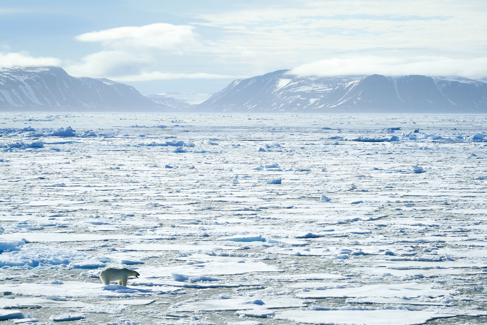 Polar Bear on Sea Ice, Arctic Circle