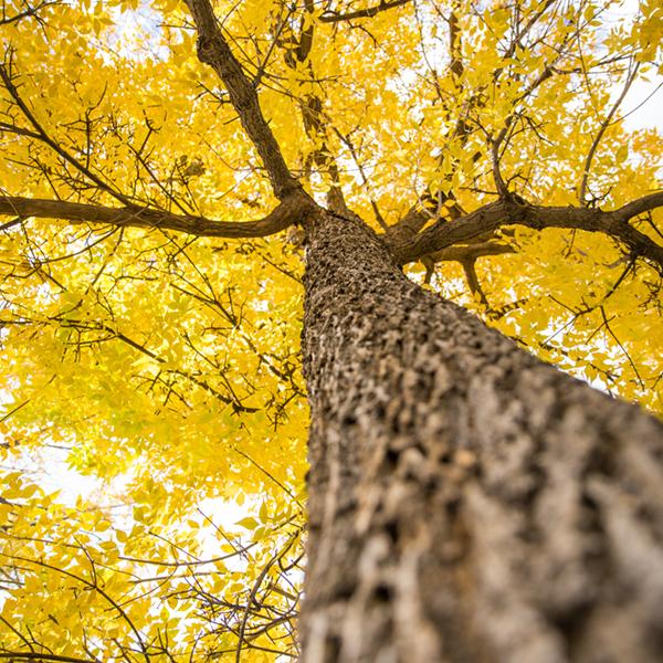 BoulderForestry.jpg