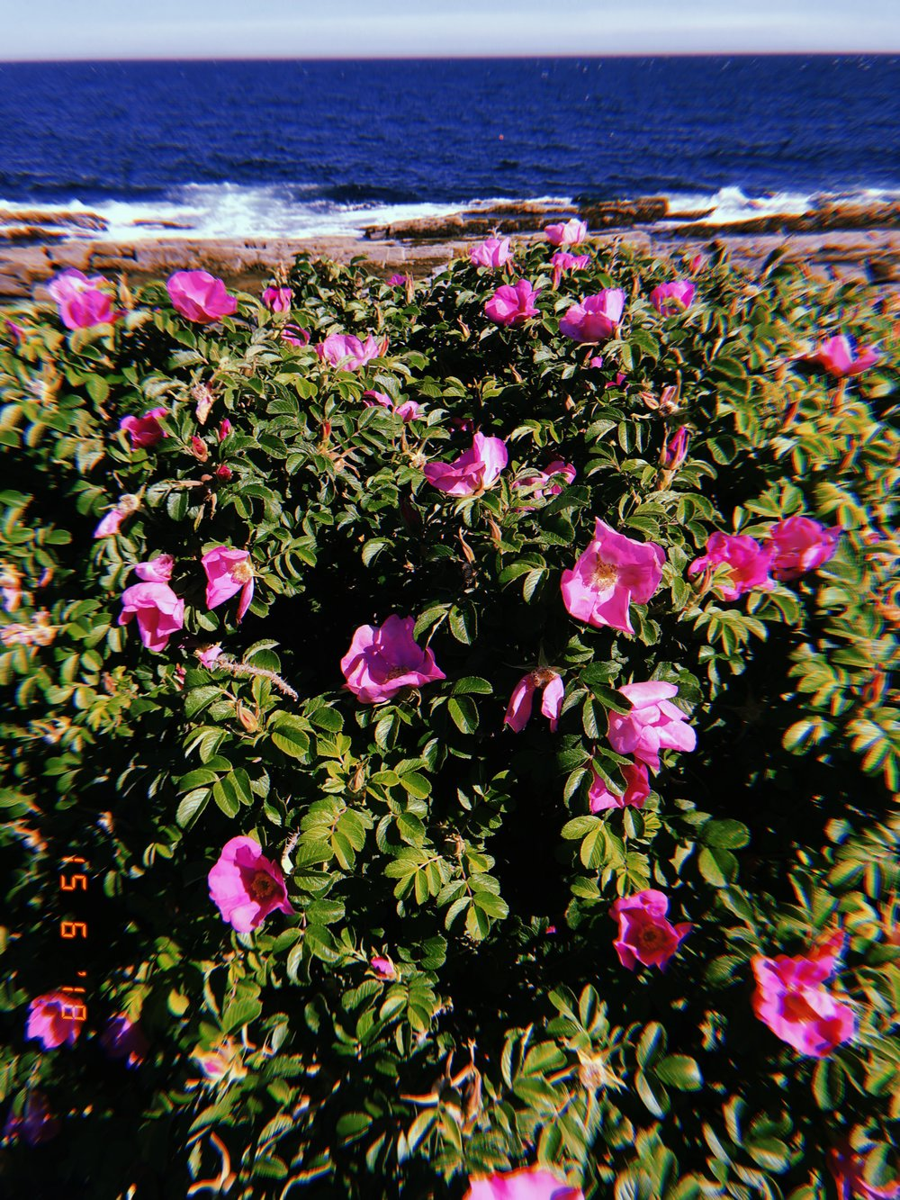 New England flora.