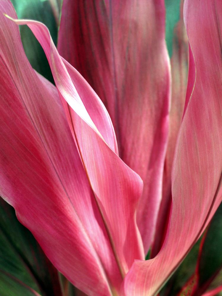 Geoffrey Baris botanicals