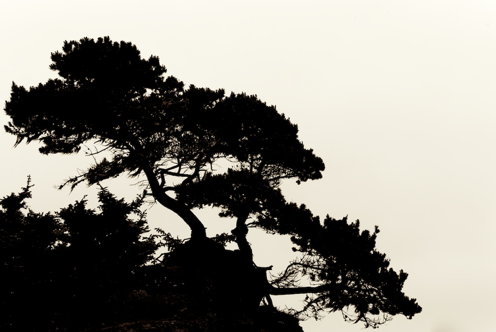 Silhouette of tree growing at summit of oceanside cliff