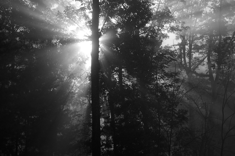Beams of Morning Sunlight streaming through the fog among the trees