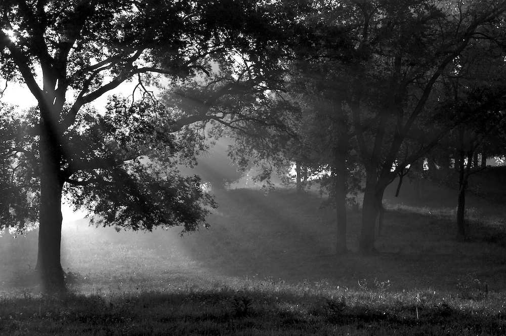 Sunrise with through trees and fog. The sun's rays streaming through.