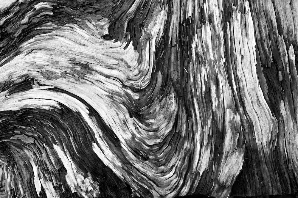Abstract Grain in Driftwood, Ruby Beach, Olympic National Park, Washington