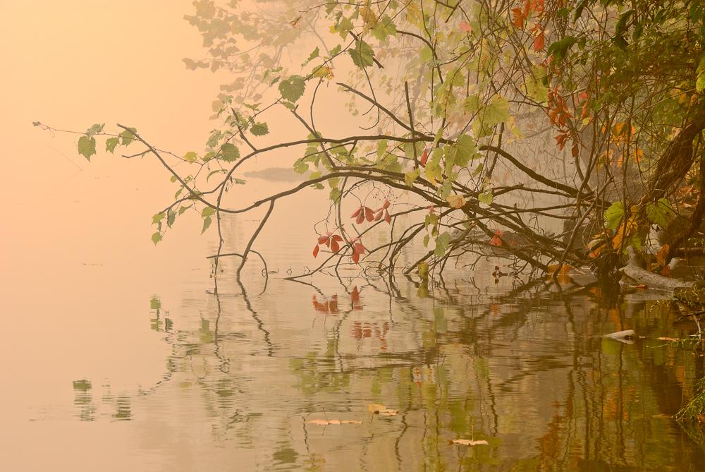 River+Fog+I_01.jpg