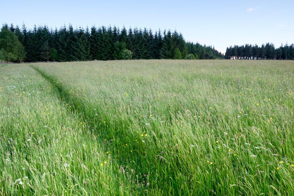Wildflower-meadow-Northumberland-England-Photo-by-Tom-Bland.jpg