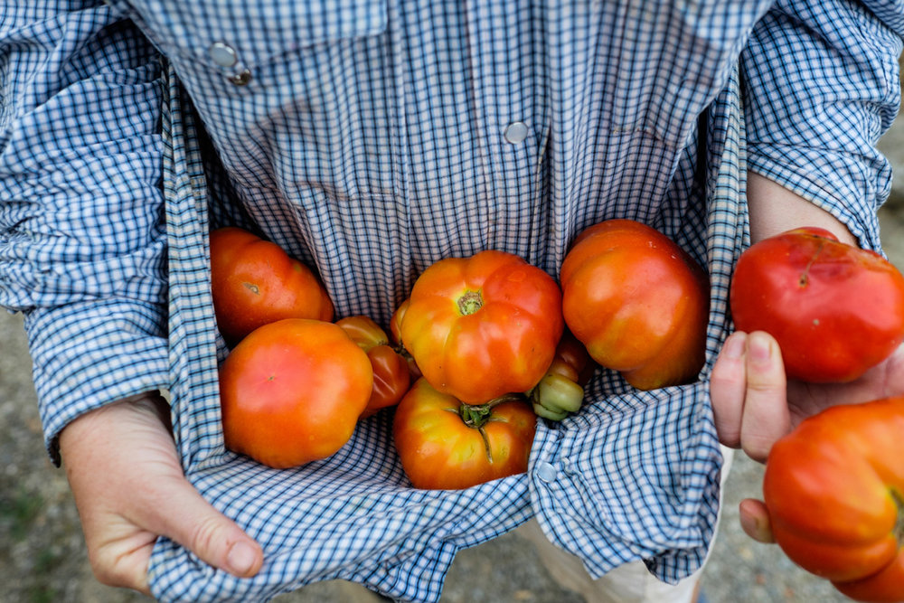 Tomato-harvest-farmer-Tuscany-Italy-Photo-by-Diana-Pappas.jpg